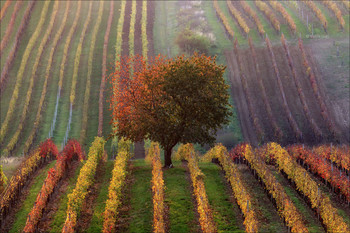 Vinic podzim / ***