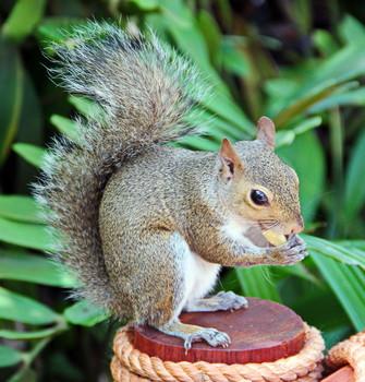 Squirrel / ***