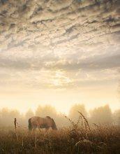Milky morning / ***
