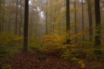 About autumn ... / ***