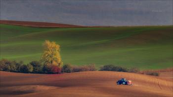 Wavy autumn fields / ***