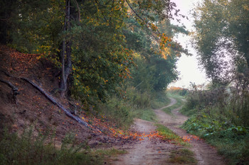 about autumn / ***
