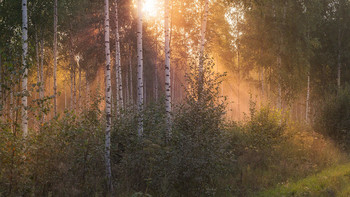 Birch Grove / ***
