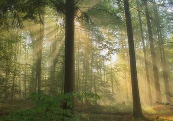 Fog and sun / ***
