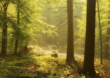 The breath of the forest / ***