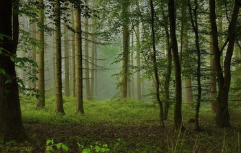 Morning fog / ***