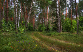Forestry / ***