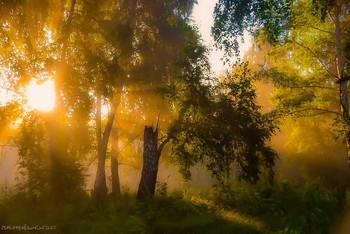 Morning landscape / ...