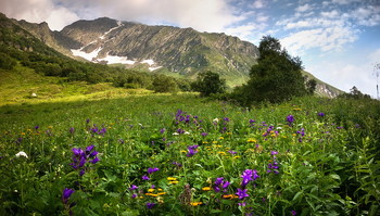 Summer in the mountains / ***