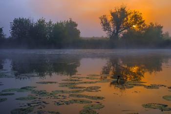 Summer Fog / ***