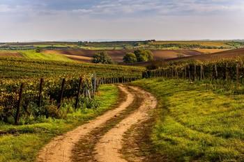 Morawskie winnice / +++