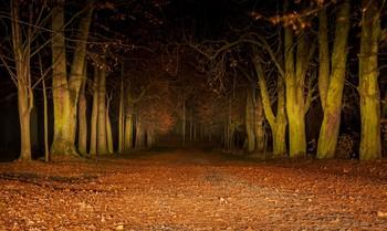Noc w parku. / +++