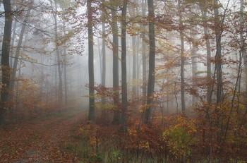 Late autumn. / ***