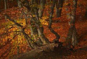 Autumn forest / ***