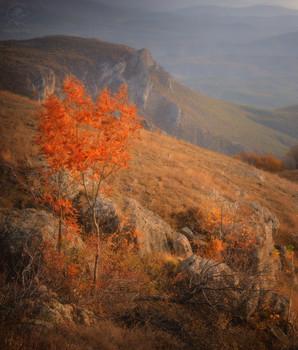 Autumn Crimea / 2020