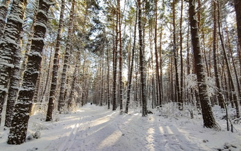 in the winter forest / ***